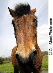 портрет, лошадь