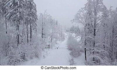 посмотреть, лесистая местность, волшебный, снежно