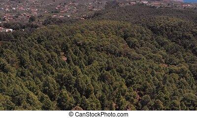 посмотреть, лес, антенна, сосна, tenerife