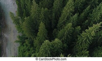 посмотреть, река, антенна, лес, хвойный