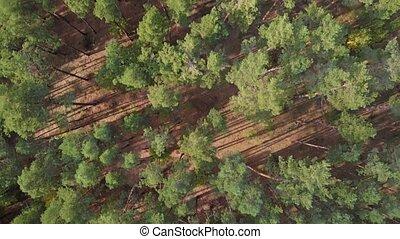 посмотреть, сосна, лето, лес, антенна, задний план