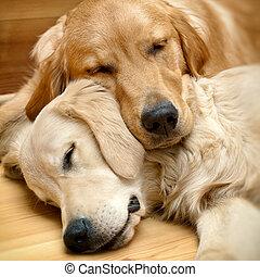 посмотреть, of, два, dogs, лежащий