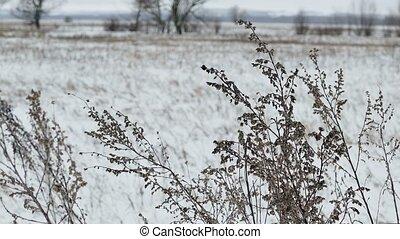 природа, пейзаж, поле, снег, сухой, зима, трава