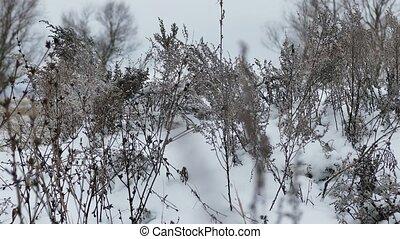 природа, пейзаж, снег, сухой, зима, трава
