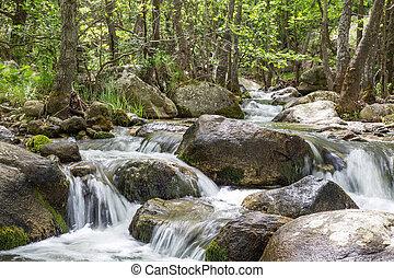 природа, пейзаж, with, trees, and, река