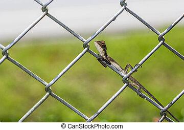 провод, забор, хамелеон
