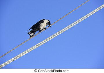 провод, птица