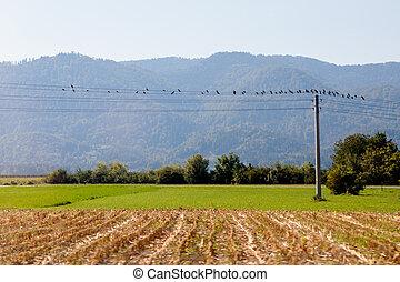 провод, birds