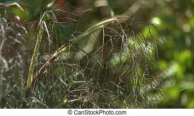 прут, сорняками, трава