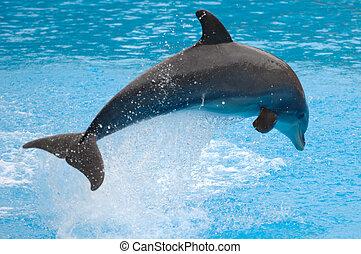 прыжки, дельфин