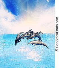 прыжки, море, dolphins