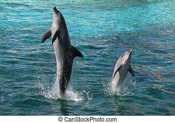 прыжки, dolphins