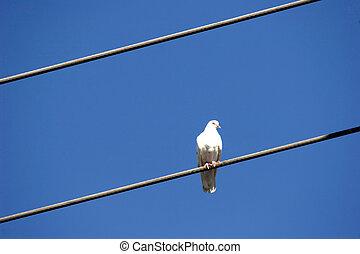 птица, на, провод