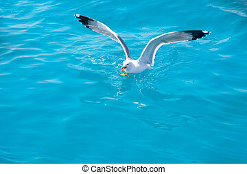 птица, чайка, на, море, воды, в, океан