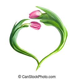 пурпурный, сердце, белый, isolated, tulips
