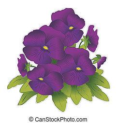 пурпурный, цветы, анютины глазки