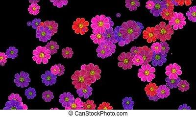 пурпурный, falling, цветок, маргаритка