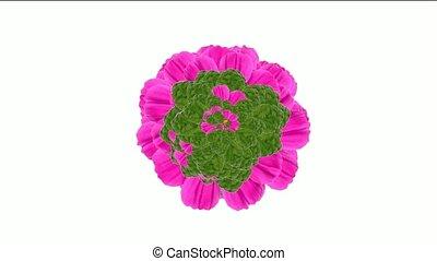 пурпурный, leaves, цветок, blooming
