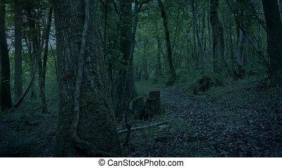 пустой, лесистая местность, вечер, дорожка