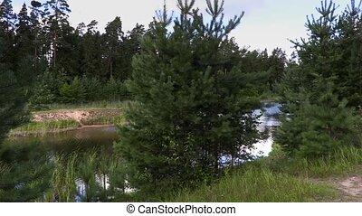 путешественник, гулять пешком, sticks, лес
