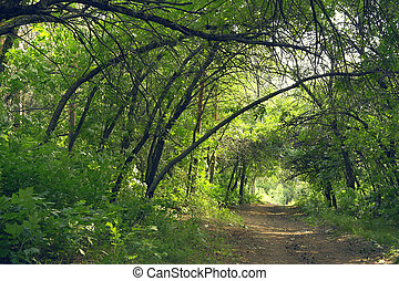 путь, в, лето, лес