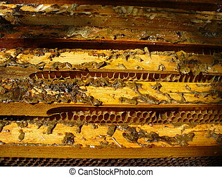 пчела, коробка, 5