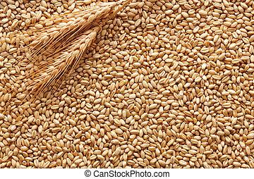 пшеница, задний план
