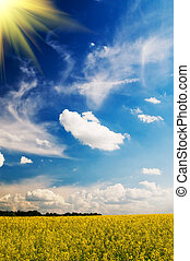 пшеница, springtime., утро, рано, поле, безмятежность, солнце