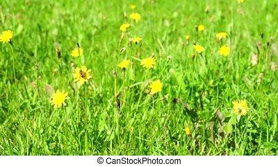пыльца, сбор, цветок, пчела