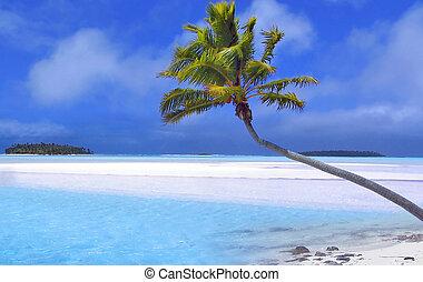 рай, пальма
