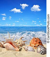 ракушки, море