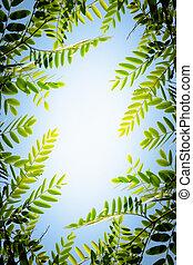 рамка, листва
