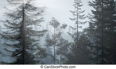 рано, нордический, туман, утро, туманный, лес