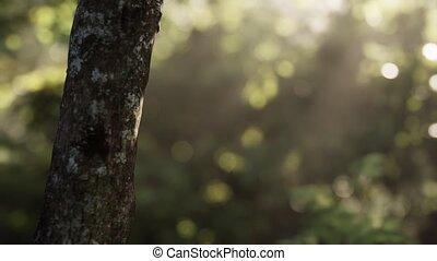 рано, туманный, утро, лес