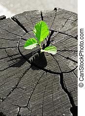растение, выращивание, вне, of, , дерево, пень