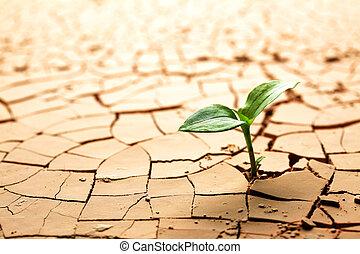 растение, в, высушенный, треснувший, грязи