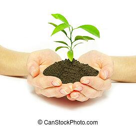 растение, в, руки