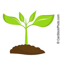 растение, молодой