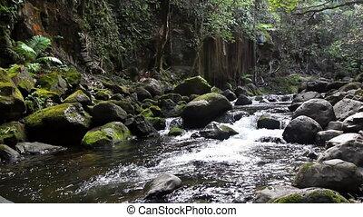 река, джунгли