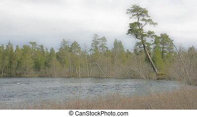 река, изгиб, лес