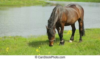 река, луг, лошадь, grazing