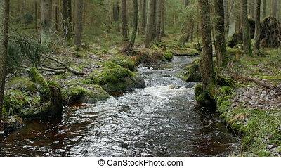 река, панорама, лес