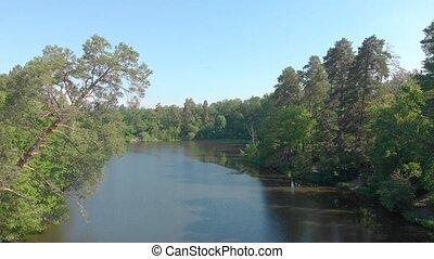 река, сосна, дерево