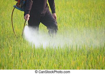 рис, поле, фермер, spraying, пестицид