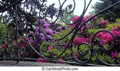рододендрон, цветок, flower., все, возможное, это, видеть, камера, марки, sides, красный, движение