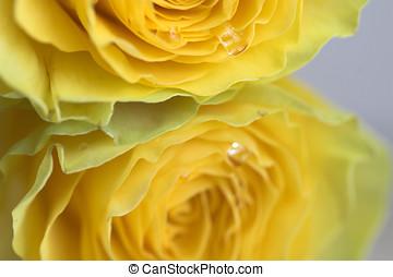 роза, желтый