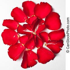 роза, красный, лепесток