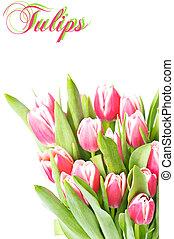 розовый, весна, цветы, тюльпан