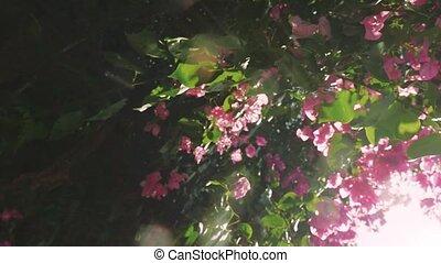 розовый, красивая, играть, медленный, вспышка, leaves, motion., объектив, свежий, зеленый, солнце, effects., через, цветы
