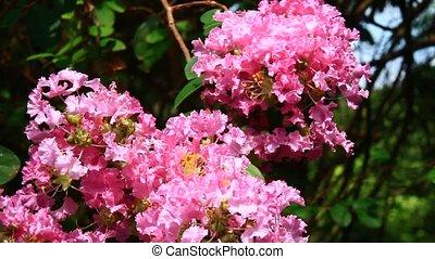 розовый, солнце, цветы